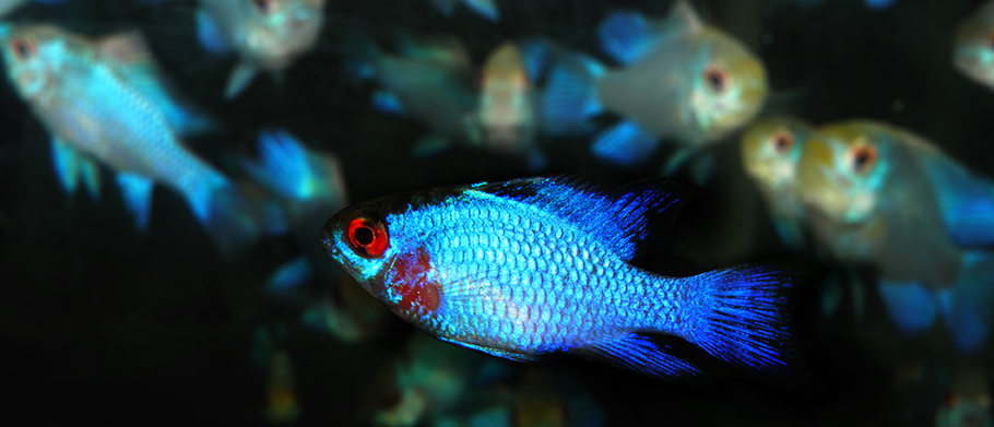 Vibrant fish in water